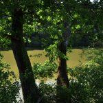 la-bergerie-des-bois-canal