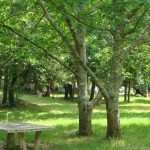 bergerie-des-bois-prairie