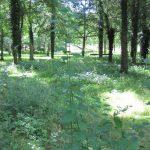 la-bergerie-des-bois prairie
