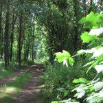 la-bergerie-des-bois-chemin