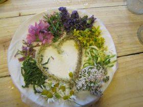 Stages-cuisine-plantes-sauvages