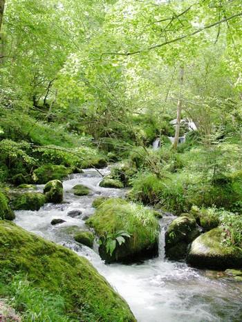 Terra Deva : partenariat avec les esprits de la nature